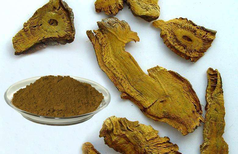 Giant Knotweed Extract 50%-99%Resveratrol for Anti-Cancer