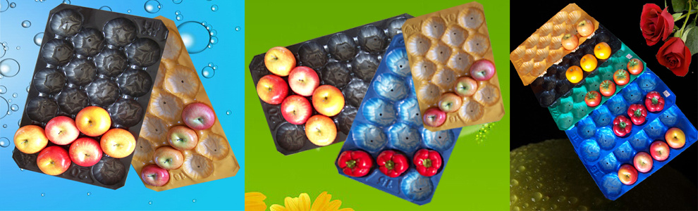 Europe Market Hot Selling 29X39cm, 29X49cm, 39X59cm Colorful Perforated Alveolar PP Tray with Factory Price