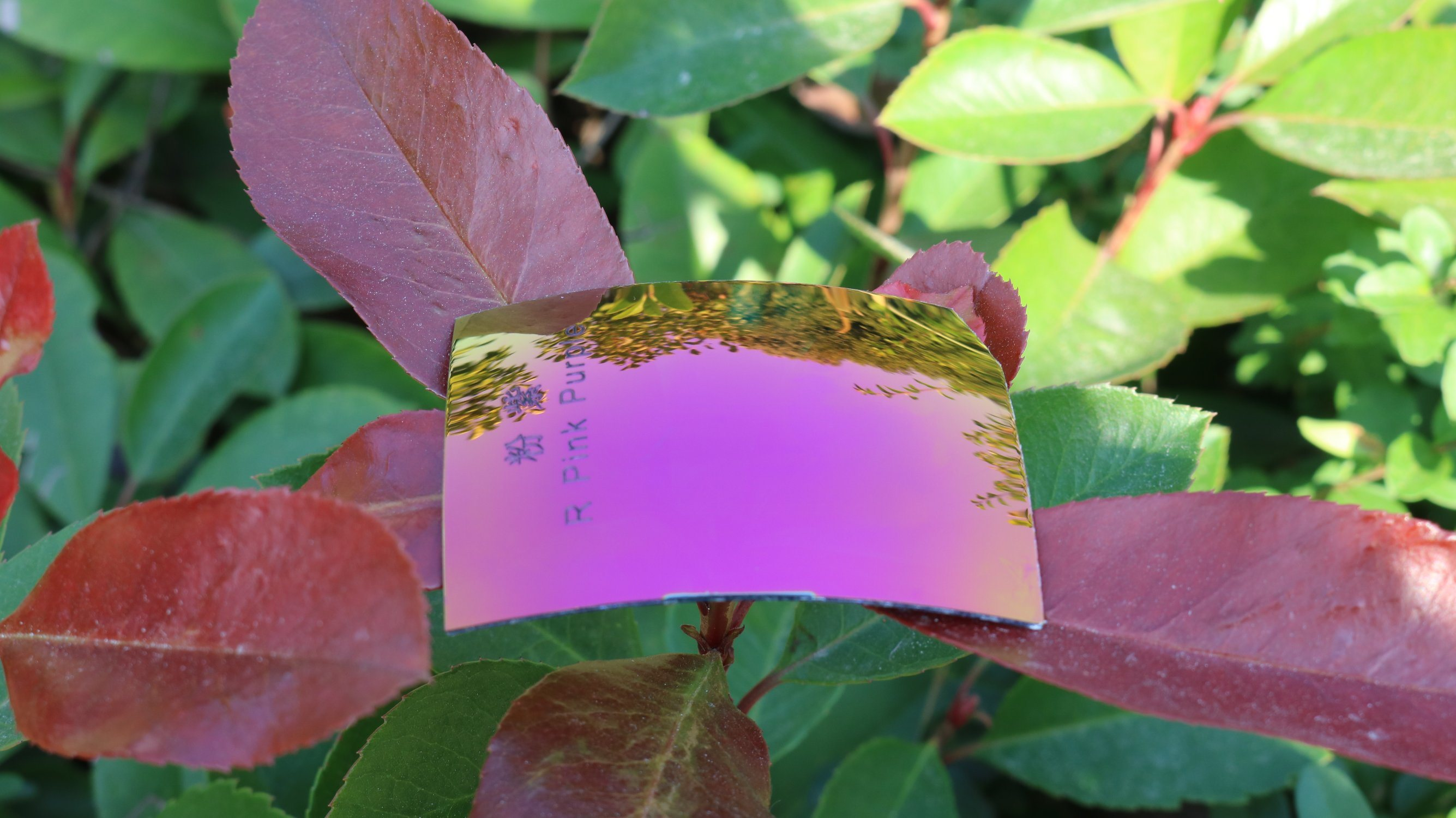 Colorful Eyeglasses Polarized Tac Lens (R Pink Purple)