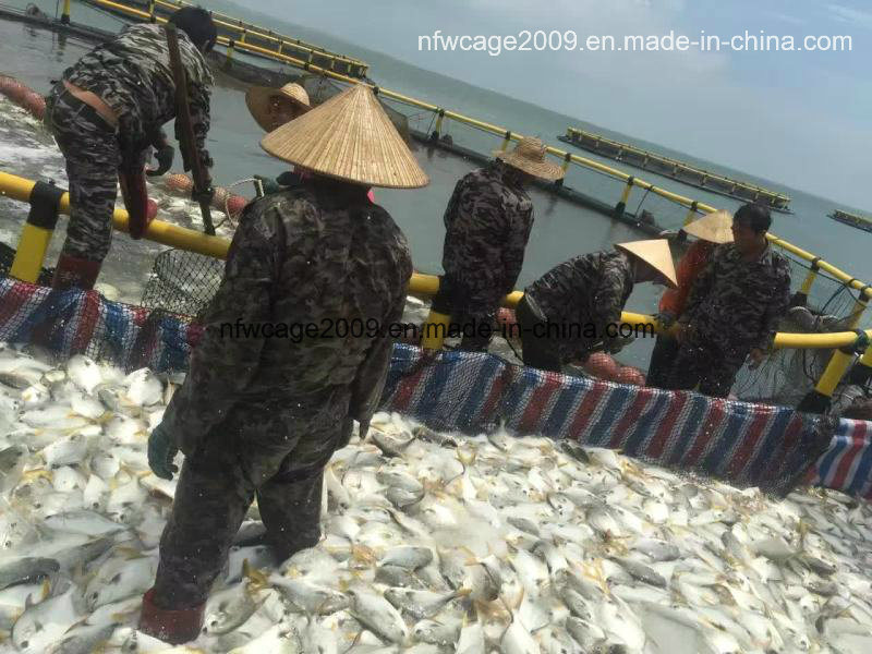 HDPE Floating Sea Pomfret Farming Fish Cage