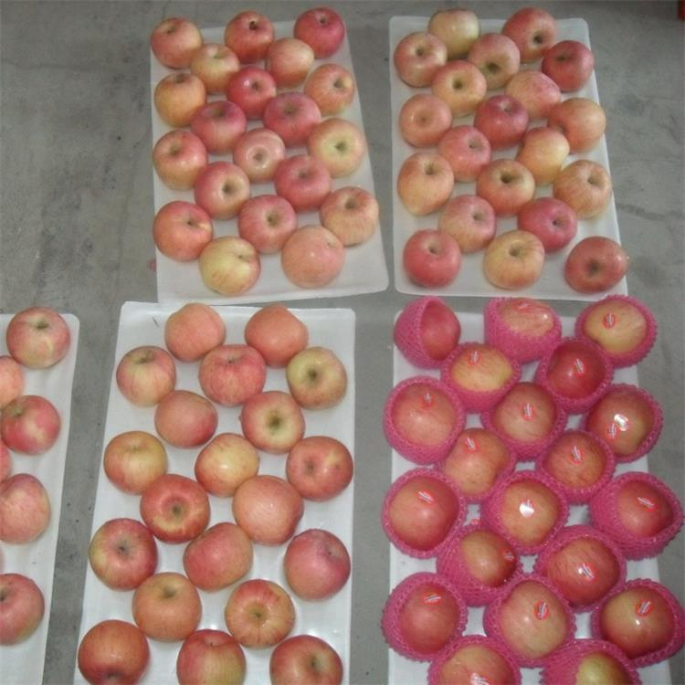 Fresh FUJI Apple New Crop