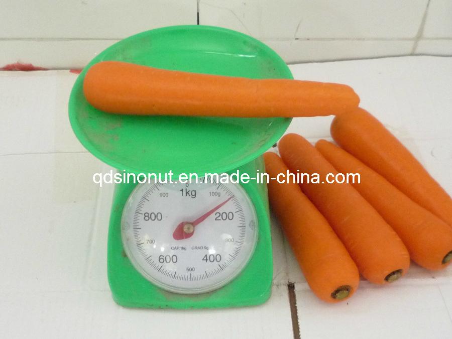 New Crop S/M/L Fresh Carrot
