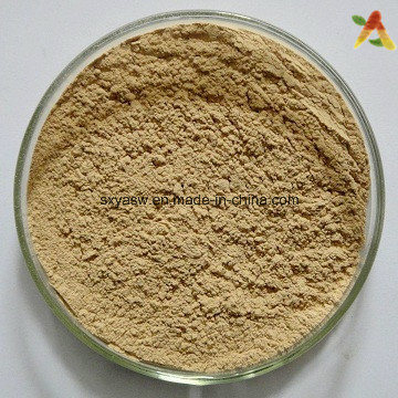 Natural Chlorogenic Acids Green Coffee Bean Extract