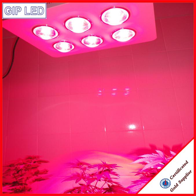 China Manufacturer 756W COB LED Grow Lights for Medical Plants