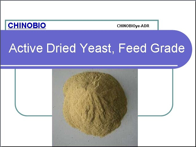 Feed Grade Active Dried Yeast for Poultry and Animal Feed