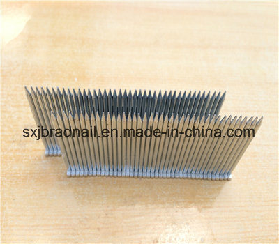 Galvanized St Nails for Construction and Packaging From China