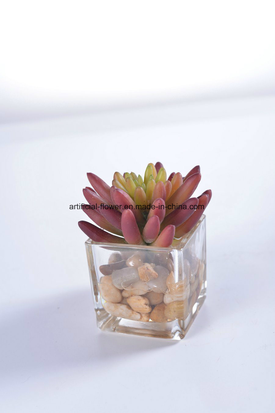 Cactus and Succulent in Glass Vase with Faux Water with Rock for Gift