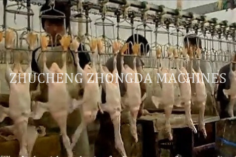Full Set of Good Quality Duck Slaughtering Machines