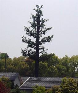 Artificial Bionic Palm Tree, Steel Pole Communication Tower