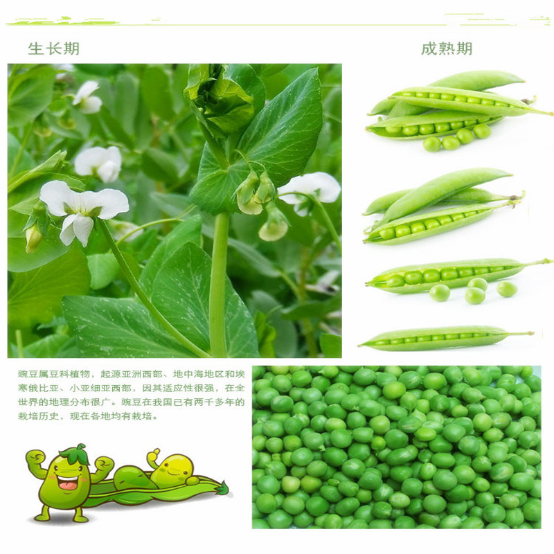 Freeze Dried Green Peas