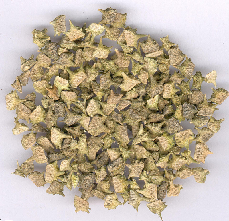 Natural Franosterols Saponins Tribulus Terrestris Extract
