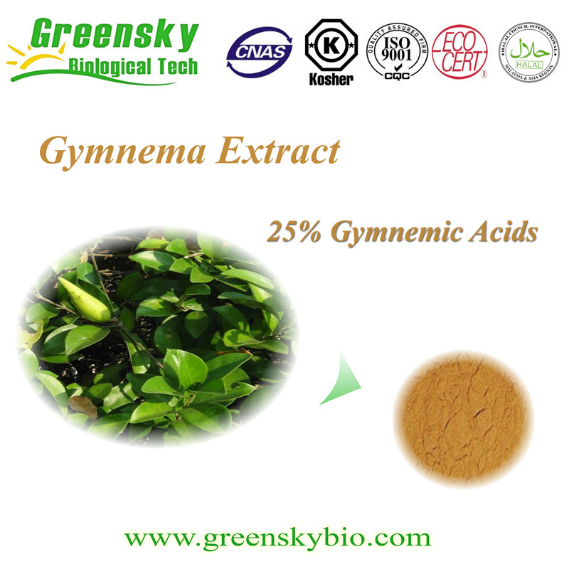 High Quality Greensky Gymnema Extract 25% Gymnemic Acids