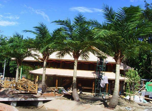 Artificial Coco Palm Tree Outdoor or Indoor Use Gu-Bj-769-Coco-Palm-Mix