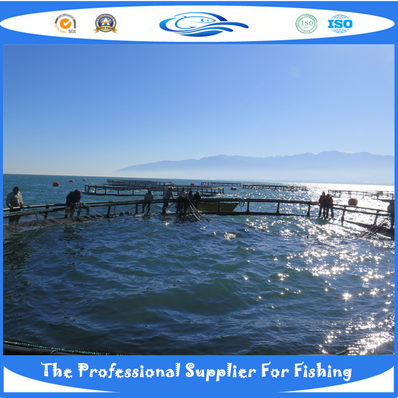 HDPE Fish Cage (WP_20130826_001)