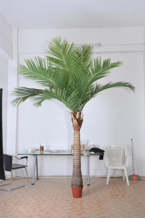 Artificial Plants and Flowers of Coco Palm 5m Gu-SL1105094202