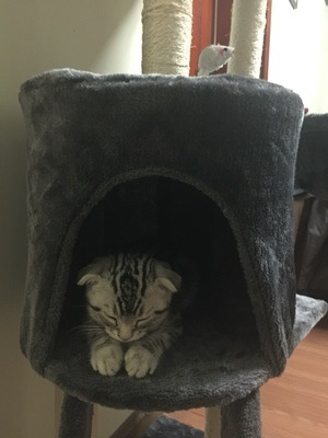 100% Polyster Boa Fake Fur on Cat Trees