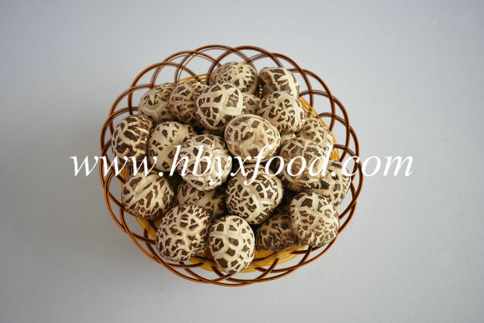 Dried Wild White Flower Shiitake Mushroom