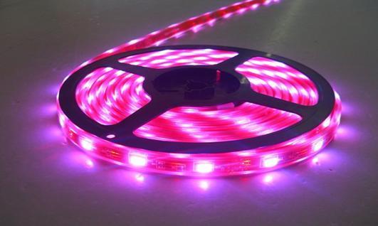 LED Strip 5050SMD LED Light LED