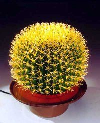 China Rotund Cactus Light China Lamp Lighting
