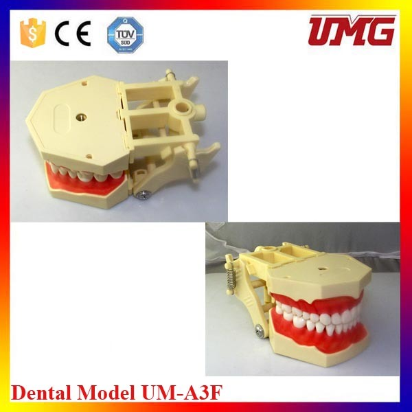 Small F Tooth Model with 32 Teeth