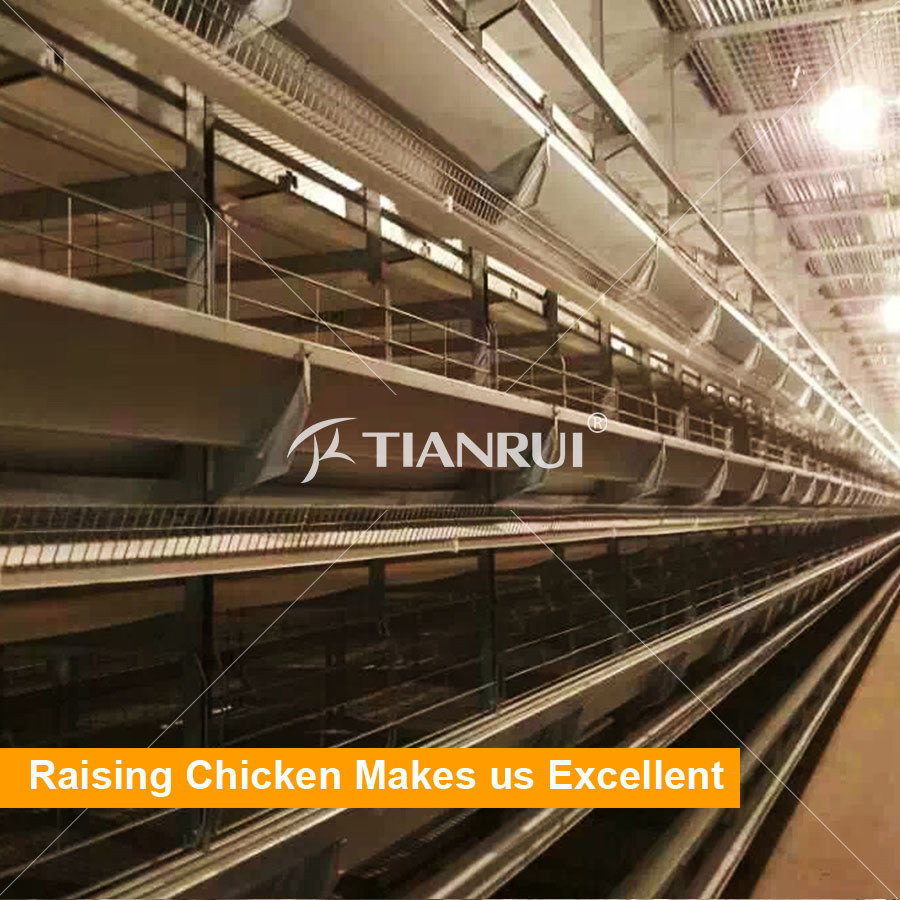 Tianrui 4 Tiers H Type Automatic Poultry Layer Cages system