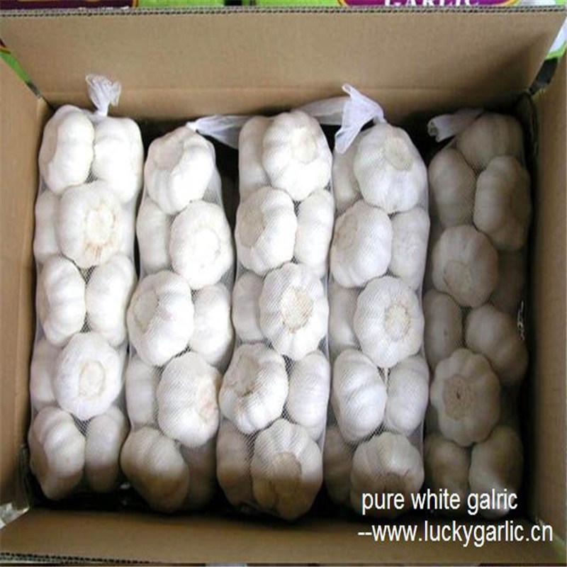 2017 New Season China Good Quality Pure White Fresh Garlic