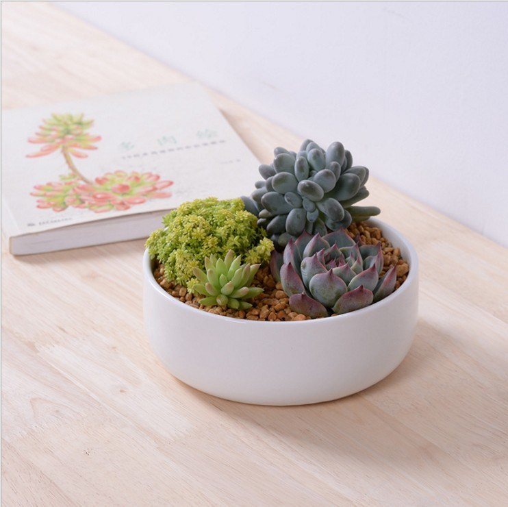 Mini Personalized Ceramic Olive Boat Shaped White Flowerpot