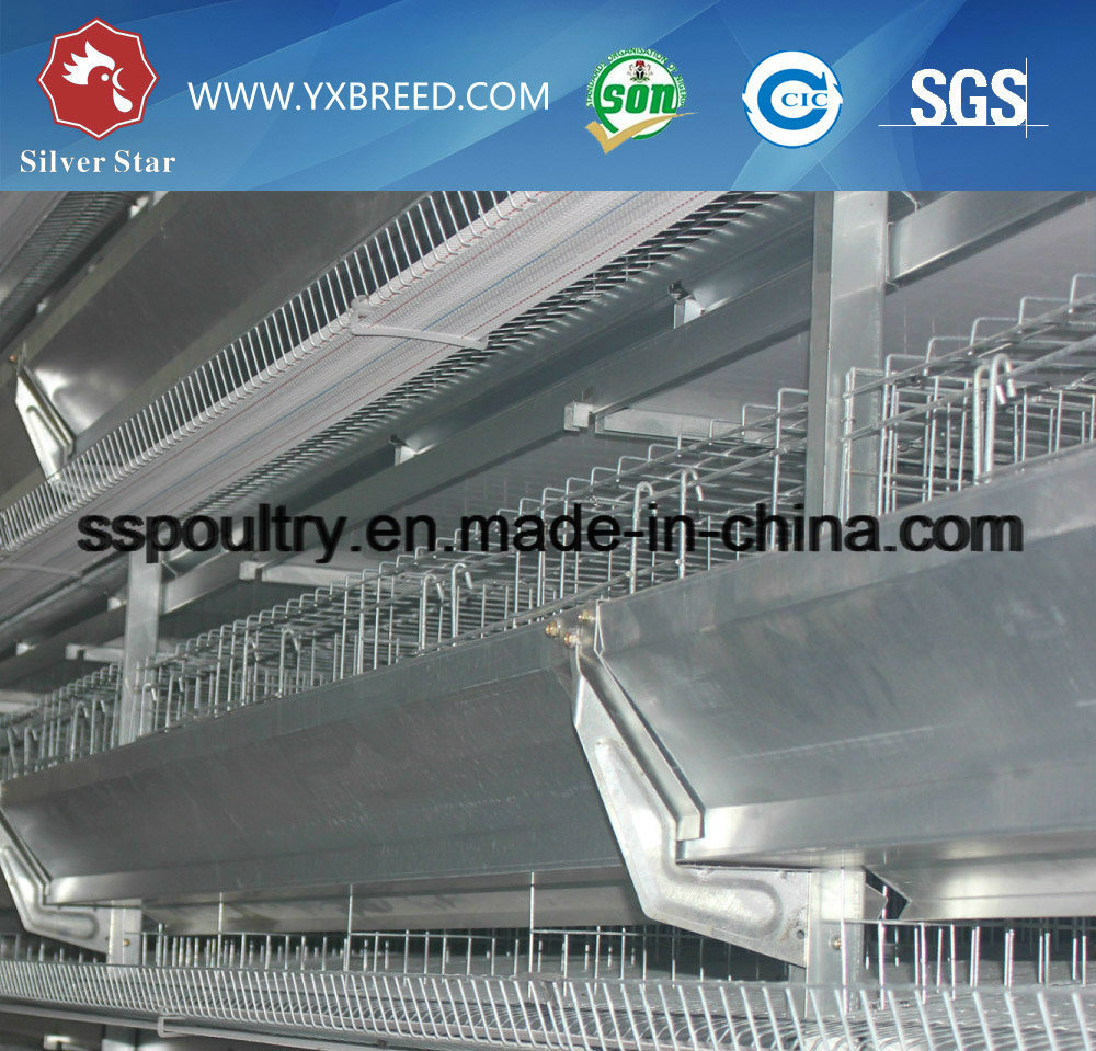 Automatic H-Type Chicken Layer Cage for Broiler