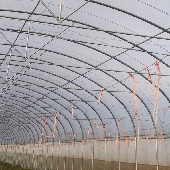 Tunnel Plastic Film Green House for Vegetable Growing