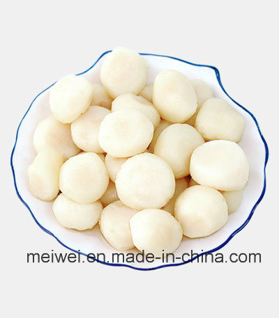 High Quality Canned Water Chestnut