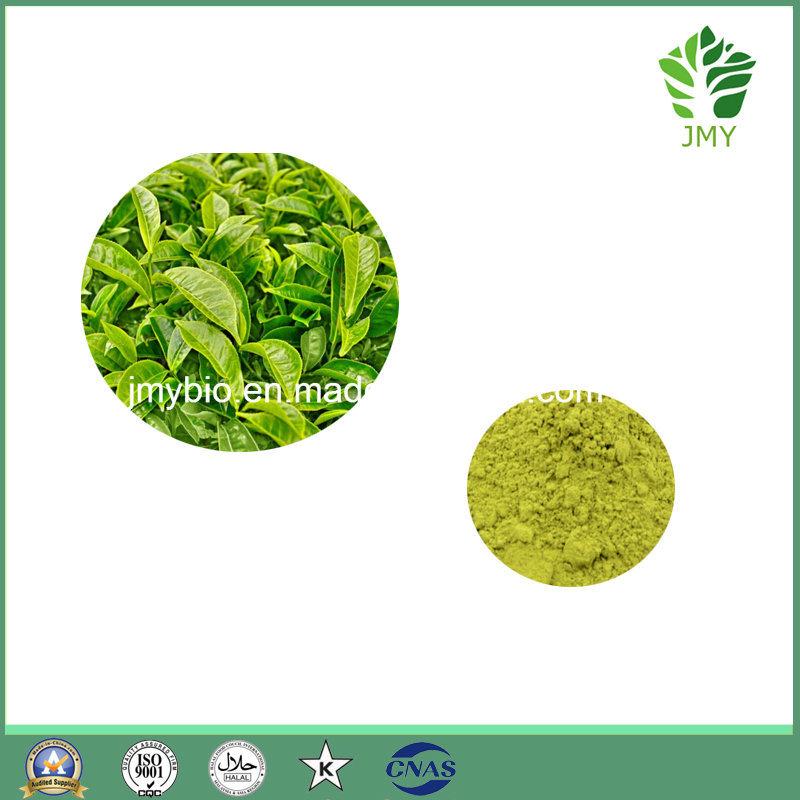 Antioxidant Green Tea Extract/L-Theanine 98%/ Tea Polyphenols