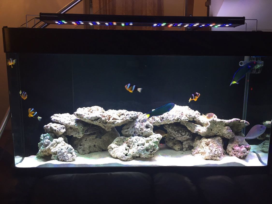 36inch LED Lighting for Marine Aquarium with Meanwell Driver