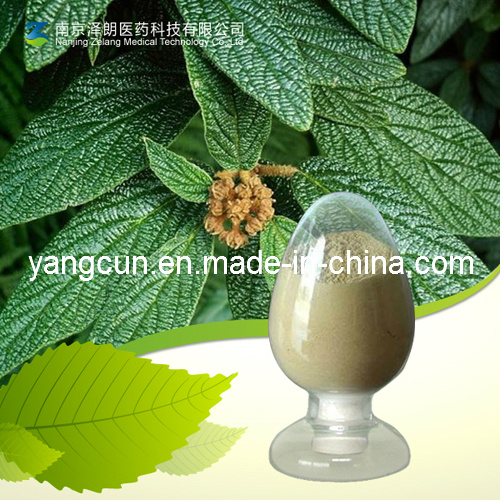 Natural Ursolic Acid CAS No: 77-52-1