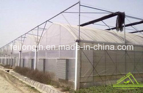 Multi-Span Arch PC Greenhouse