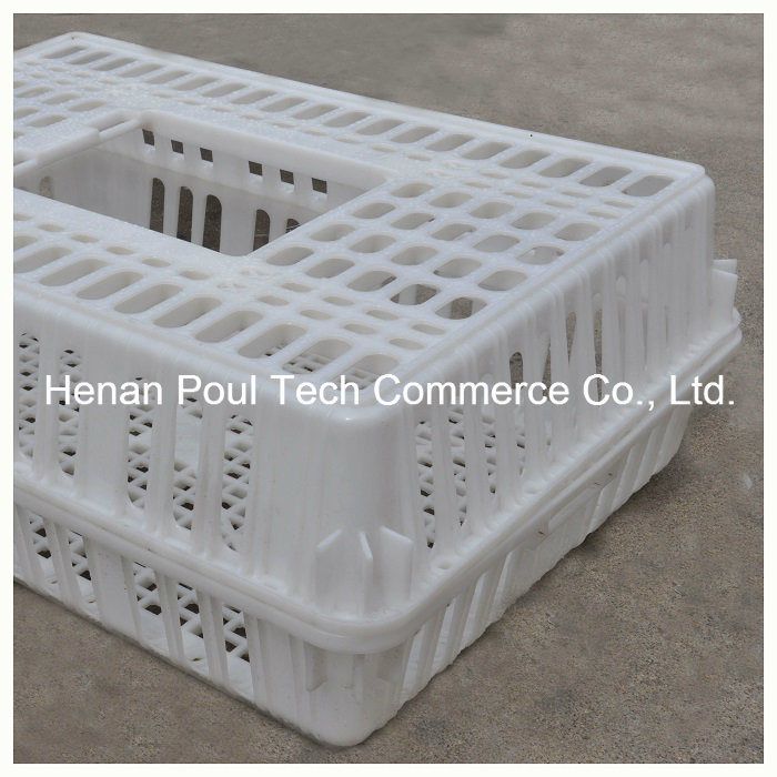Chicken Cage for The Poultry Farm