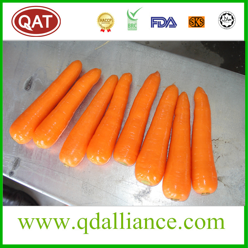 Fresh Carrot with High Quality