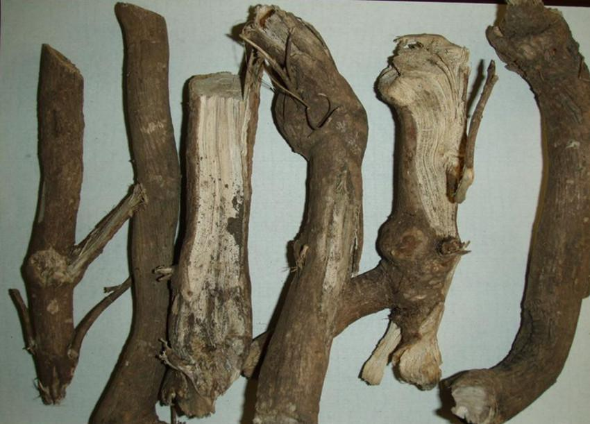 Acanthopanax Root