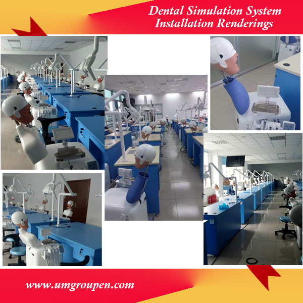 Hospital Laboratory Equipment Dental Teaching Phantom for Sale