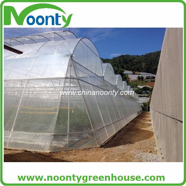 4 Sides Corridor Design Multi-Span Greenhouse