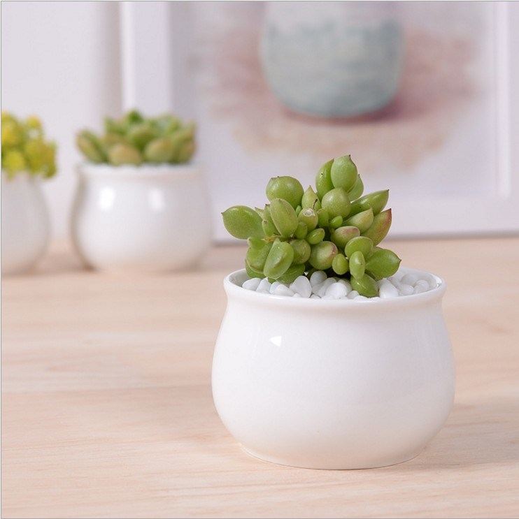 Ceramic Square White Flowerpot