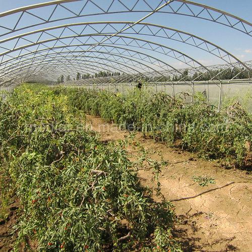 Medlar Dried Wolfberry Organic Goji