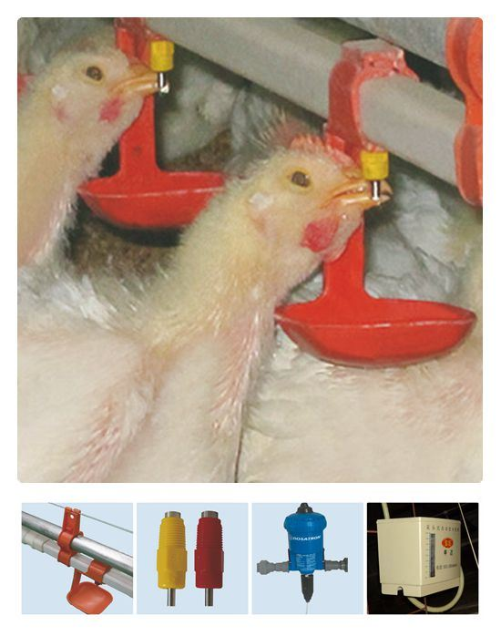Automatic Poultry Drinking Equipment for Chicken