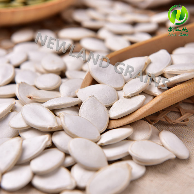 White Pumpkin Seeds From China with Top Quality 13mm 14mm 15mm for Roasted and Salted