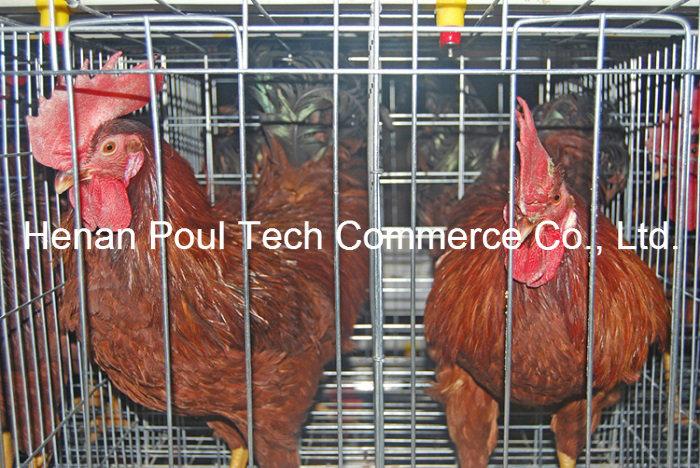 Hot Sale Galvanization Breeder Chicken Cage (A type)