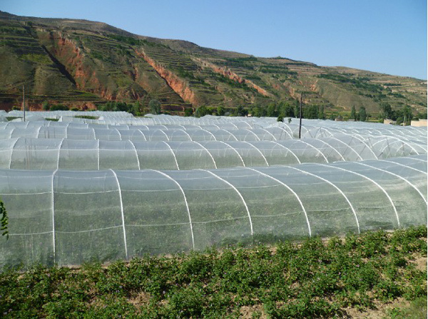 Meyabond 100% HDPE Agricultural Anti Insect Netting Greenhouse Net