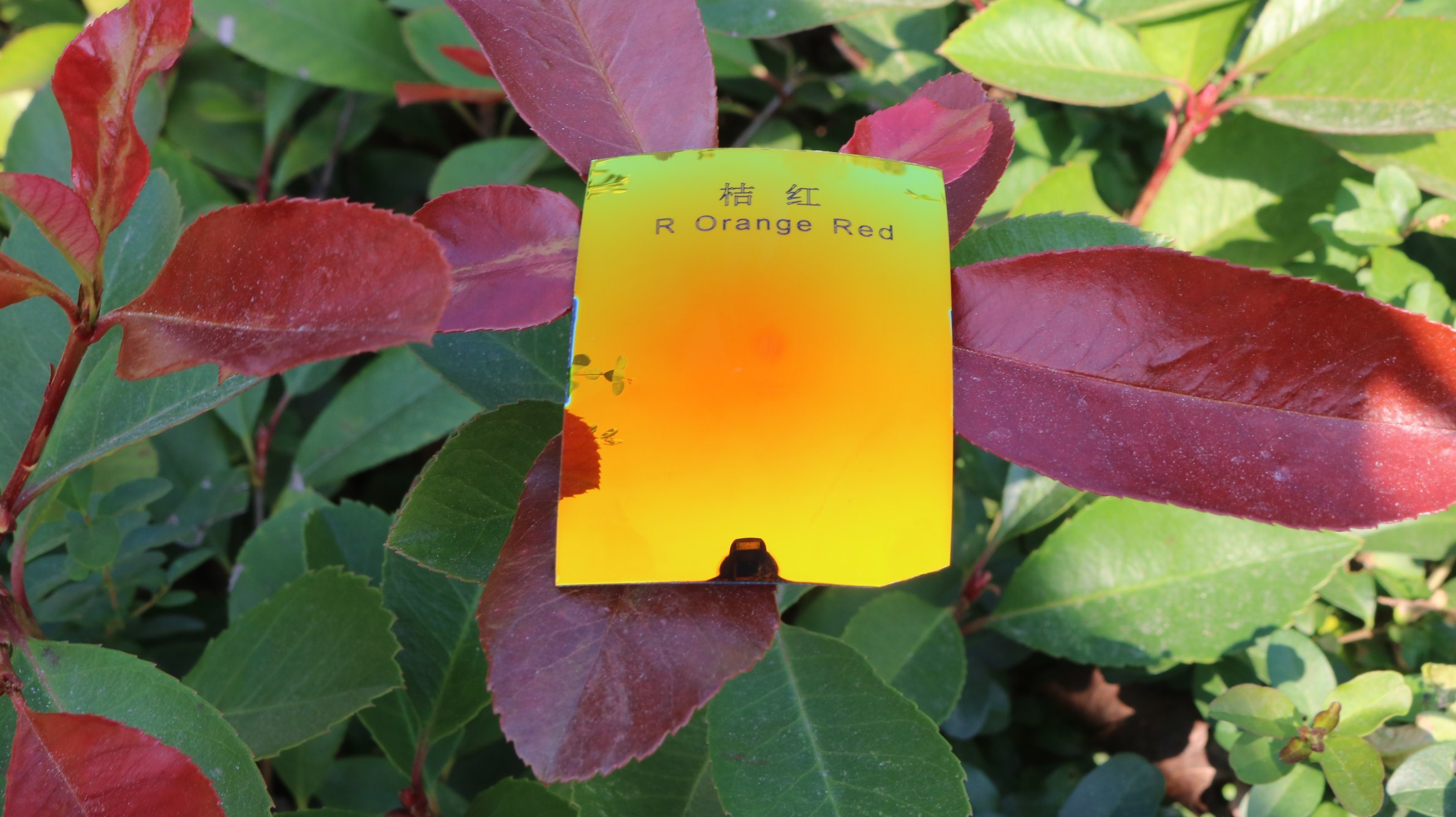Polarized Tac Replacement Lens (R Orange Red)
