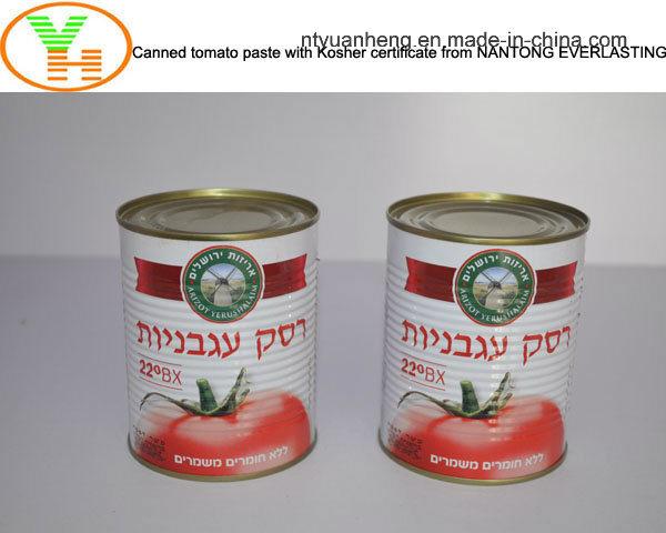 Canned Tomato Paste Fresh Tomato Vegetable