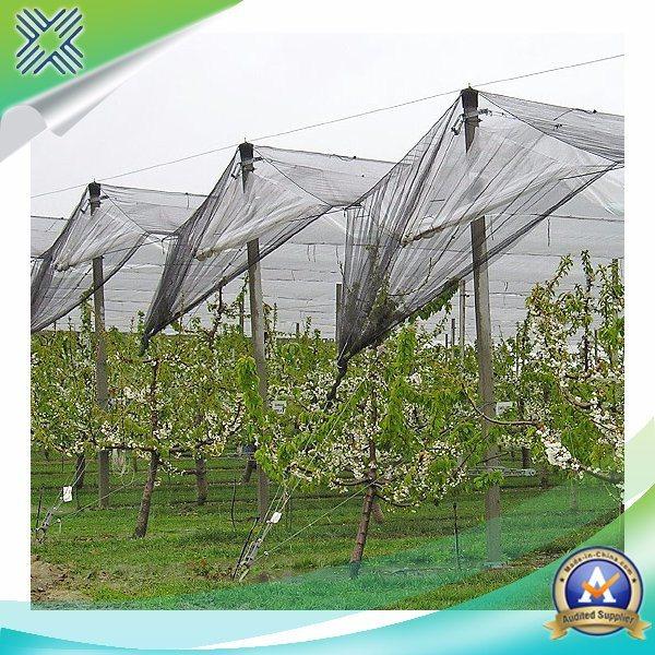 HDPE Anti-UV/ Anti-Bird Net