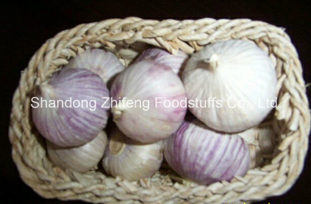 5.5cm Chinese Pure White Fresh Garlic