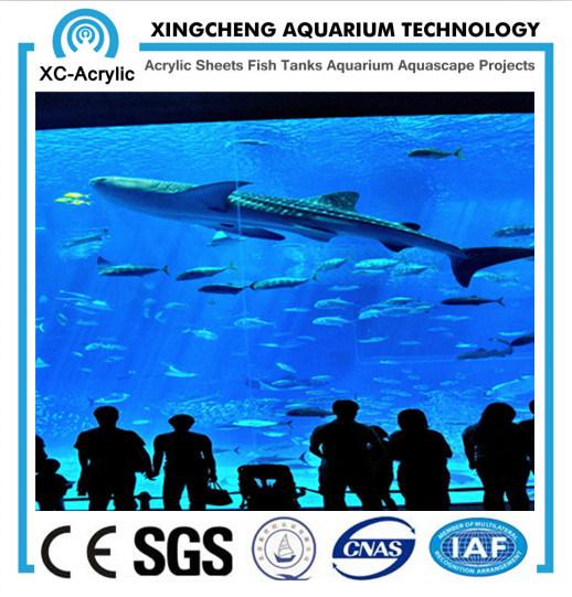 Large Transparent Aquarium Wall Acrylic Sheet Price
